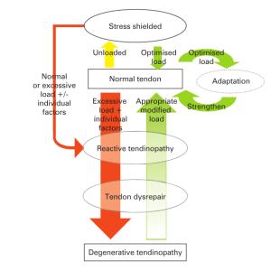 Tendinopathy-continuum